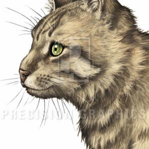 Feline_Parasites_11