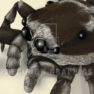SpiderSpread_alternate